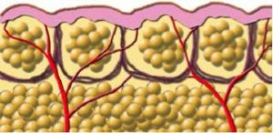 velashape-subcutaneous-fat-tissue